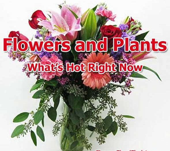 flowers and plants