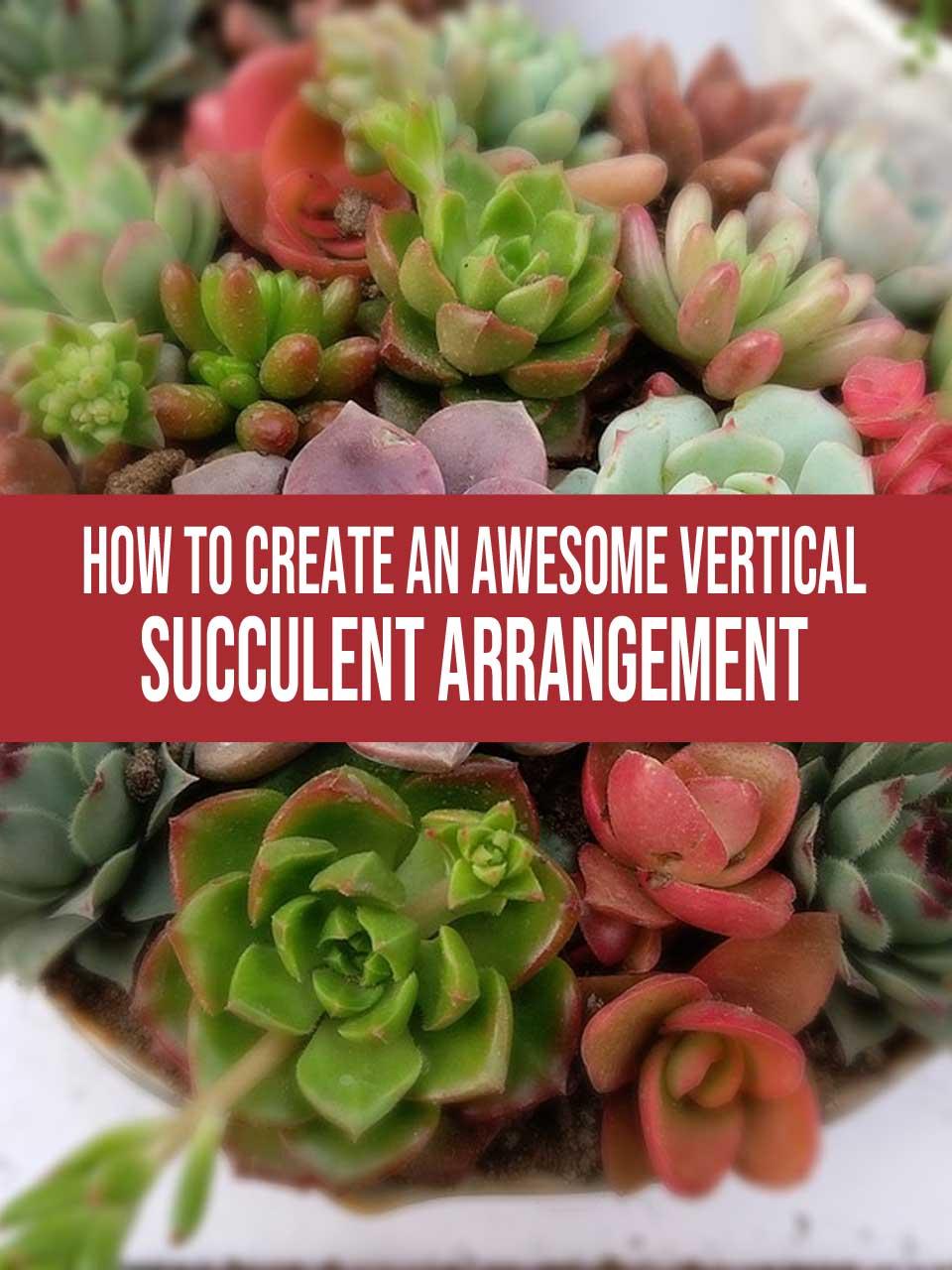 vertical succulent arrangement
