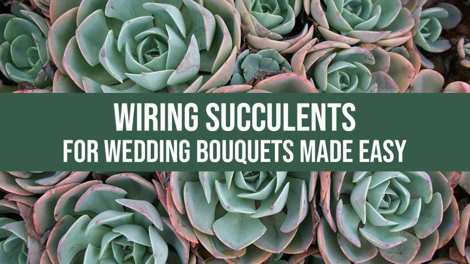 Wiring succulents how to wire succulents for wedding bouquets izmirmasajfo
