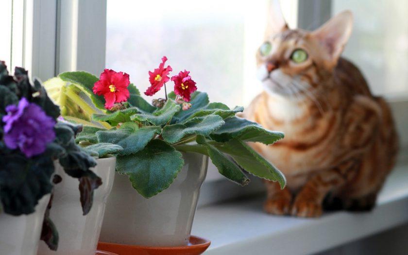 safe plants for pets
