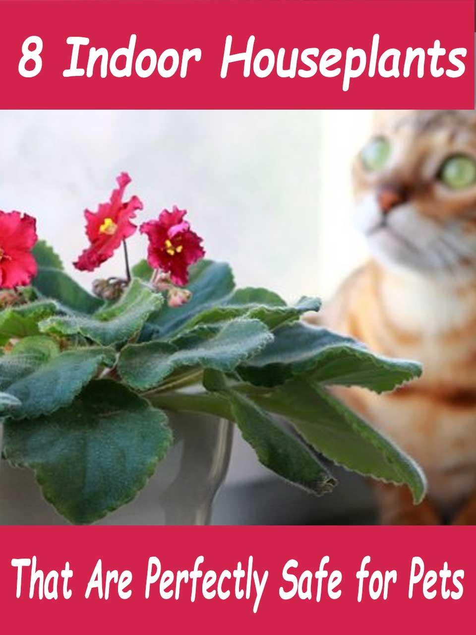 pet safe indoor houseplants