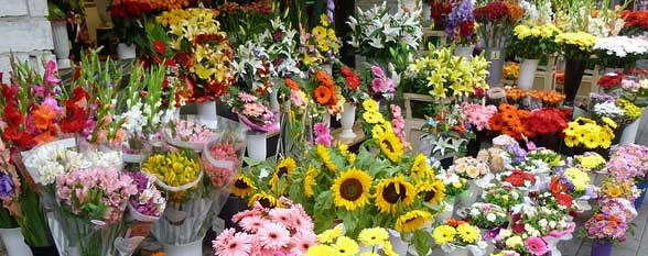 the ten most popular flowers by search results, Beautiful flower